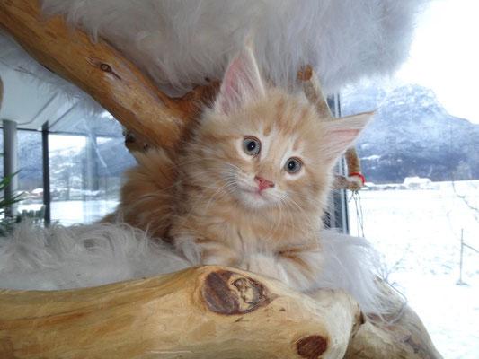 nun hat er den grossen Katzenbaum entdeckt...