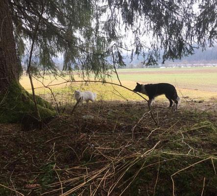 Cilla begleitet ihre Chefin und die Hunde auf den Spaziergängen