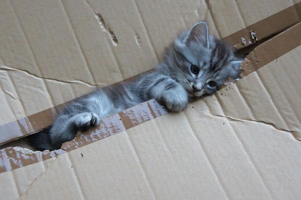 die Kiste ist ihr Lieblingsspielzeug