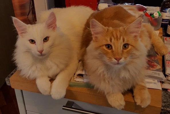 Djordy und sein Bruder Dingo, 9 Monate alt