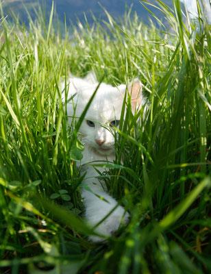 ...gut verstecken ;-) Sie scheint nicht zu wissen, dass ihr Fell im Gras leuchtet wie eine Laterne im Dunkeln ;-)