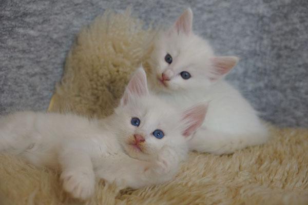 ein schöner Augen-Vergleich der beiden Brüder