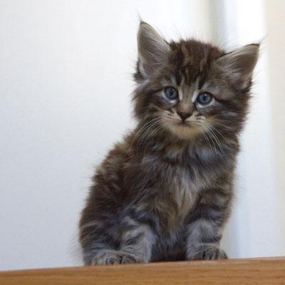 5 Wochen alt, die Treppe traut er sich noch nicht hinunter...