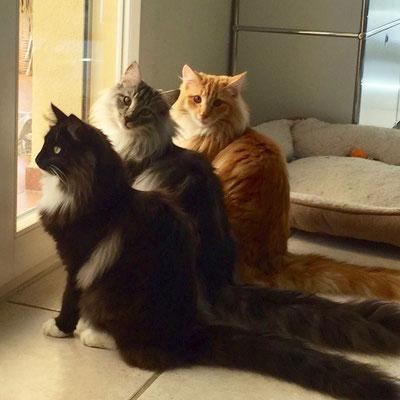 Juli 17, Caruso mit seinen beiden Geschwistern und Lebensgefährten