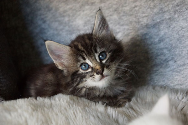 welch wunderschöner Blick :o)
