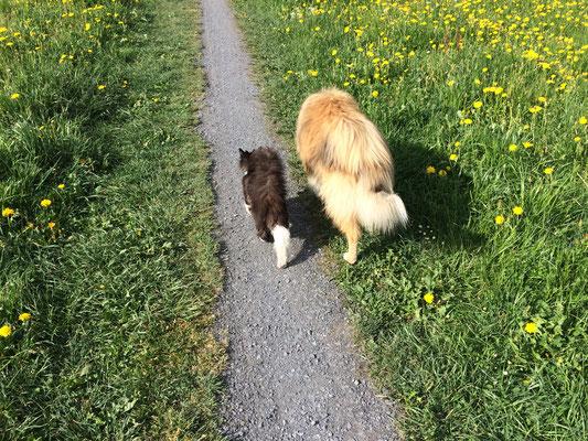 sie begleitet uns oft auf unseren Spaziergängen