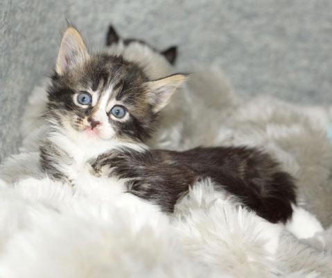 1 Monat alt