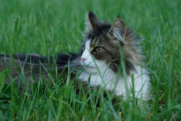 schön ist die Abkühlung im Gras