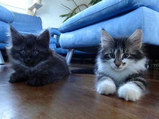 Asti und Amun 8 Wochen alt, 31.10.14