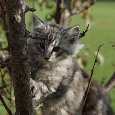 auf Bäume klettern ist lustig!