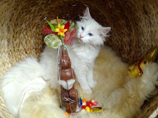 4 1/2 Monate an Ostern