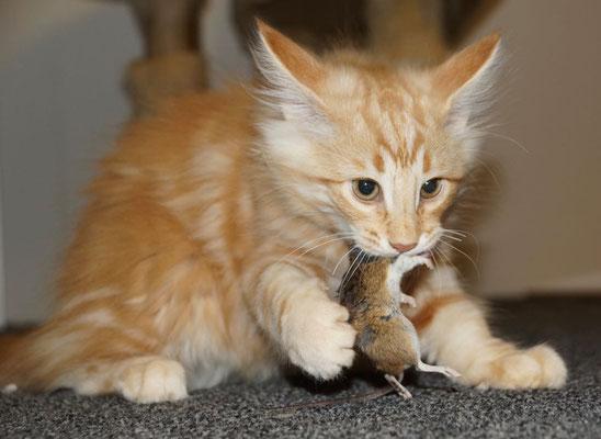 Flöckli brachte die Maus, er verwertet sie...