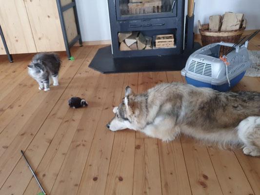 ihre Aufpasserin Lumi im neuen zu Hause wirkt anfänglich etwas bedrohlich...