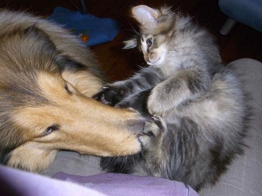 Kätzchen putzen