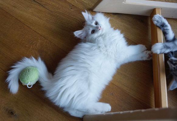 Keine liebt das Spielen wie Cilla - sie kommt sehr nach ihrer Mutter...