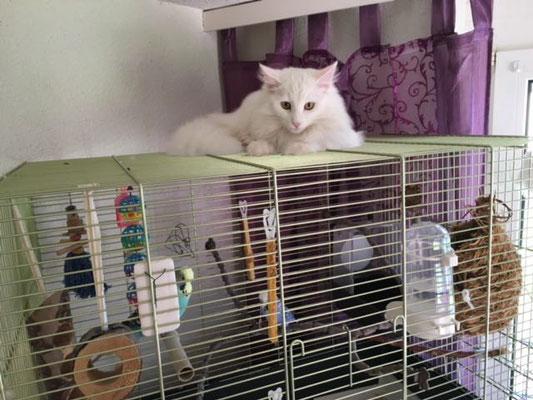 Im neuen zu Hause, vielleicht schafft sie es ja irgendwann ;-)