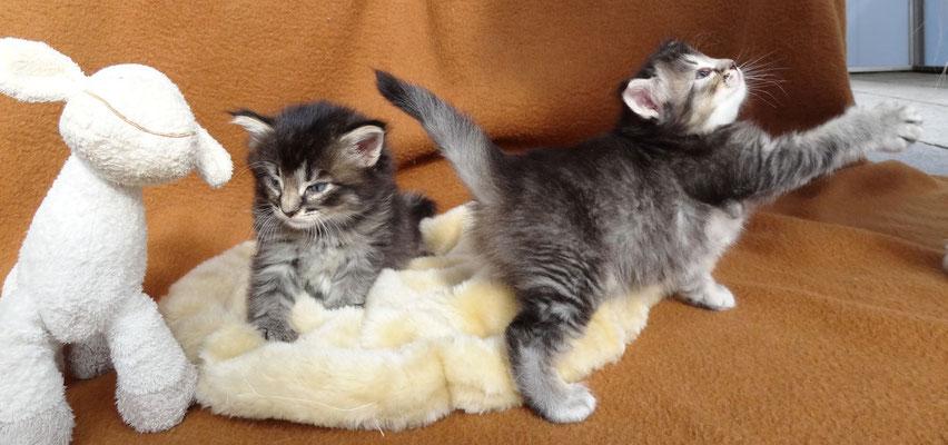 4 Wochen alt, alles ist interessant! 5.10.2012
