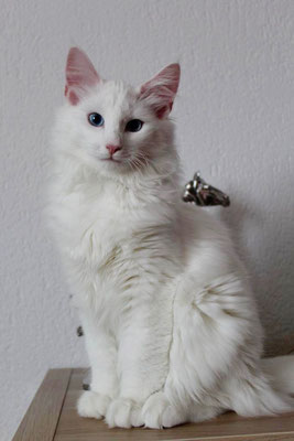 Enjo mit 5 Monaten