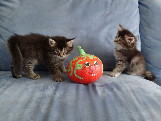 knapp 6 Wochen alt, 17.10.2012