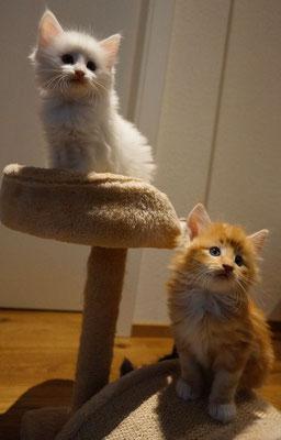 Cilla und Caspar, 6.5 Wochen alt