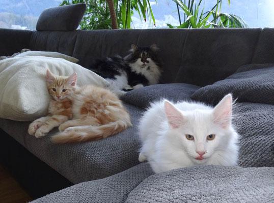 Dingo, Dusty und Amun am Relaxen
