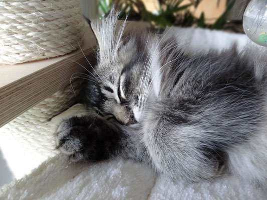 Schlaf der Gerechten...