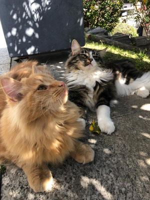 zusammen mit seiner Schwester im Garten