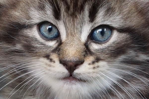 welch wunderschöner Blick!!!