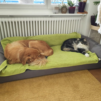 Yago darf bei seinem Hundefreund auf dem Bett liegen, Okt. 20