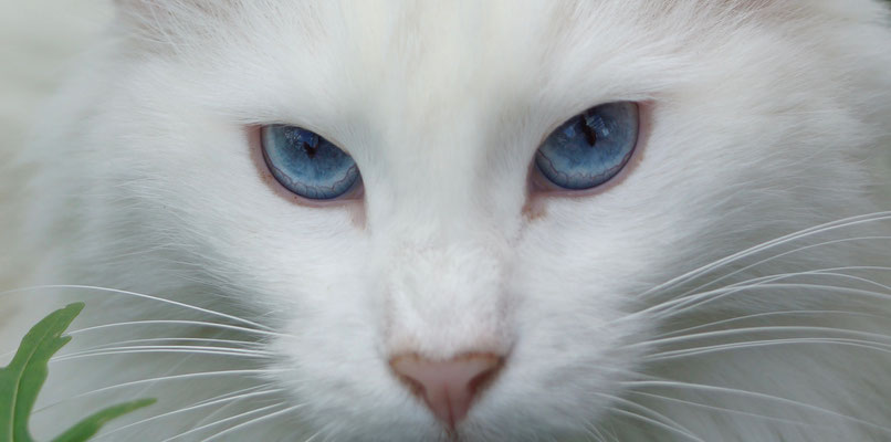 Flöcklis wunderschöne Augen, Juni 17