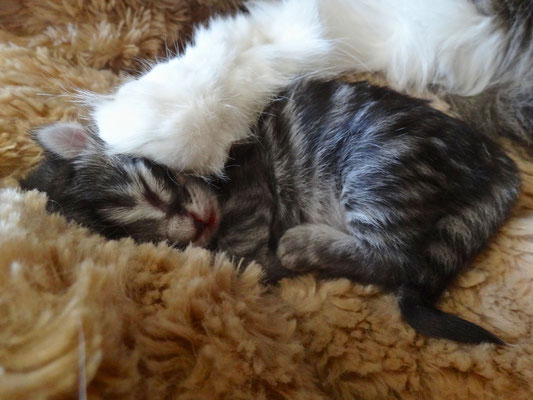 Unter Mamas Pfote… 4 Tage alt