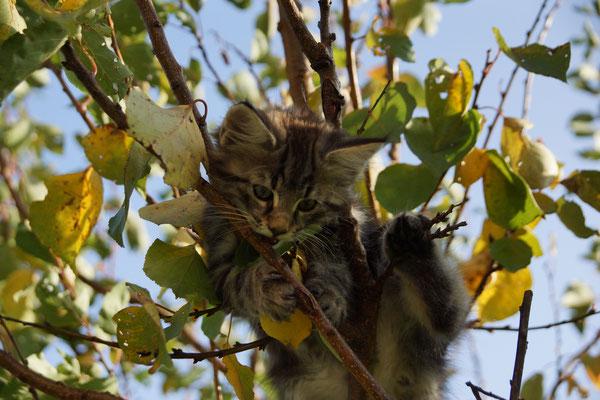 auf Bäume klettern ist toll, auch wenn die Blätter kein kulinarischer Höhepunkt sind...