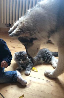 immer dabei ;-) Lumi und Moira wurden Freunde und spielen gerne mit dem Nachwuchs