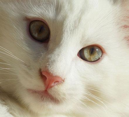 und diese wunderschönen Augen!