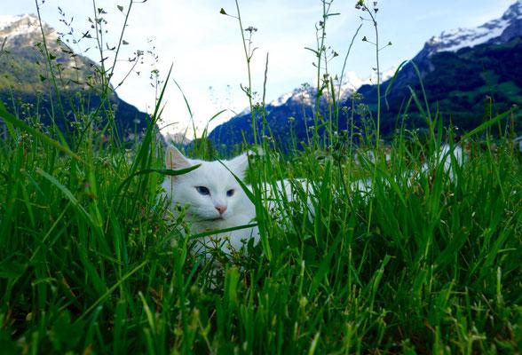 auf der Pirsch im hohen Gras