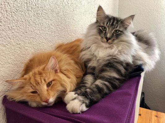 Caspar und Caruso, 2.5 Jahre alt