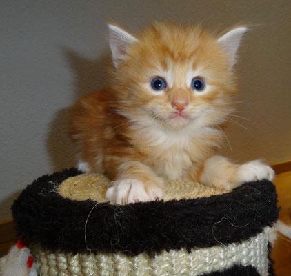 König unseres kleinsten Katzenbaums... 11.10.16