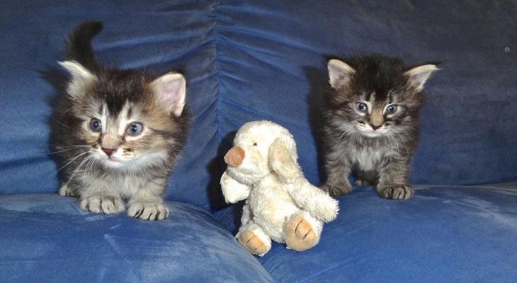 knapp 5 Wochen alt, 11.10.2012