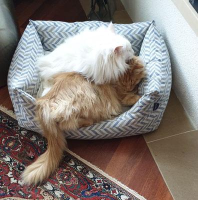 bis auf Weiteres ist das neue Hundebett besetzt... armer Hund...