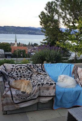 Dingo und Djordy geniessen den Sitzplatz