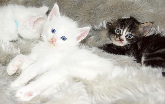 Enjo und Eika, einen Monat alt