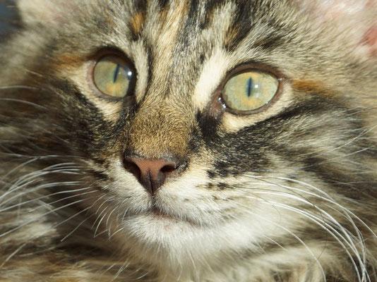und diese bezaubernden Augen!!!