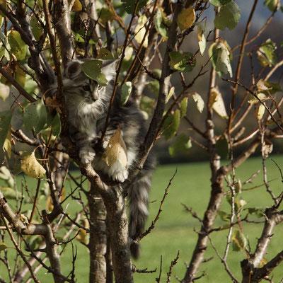 scheint richtig gemütlich zu sein auf dem Baum...