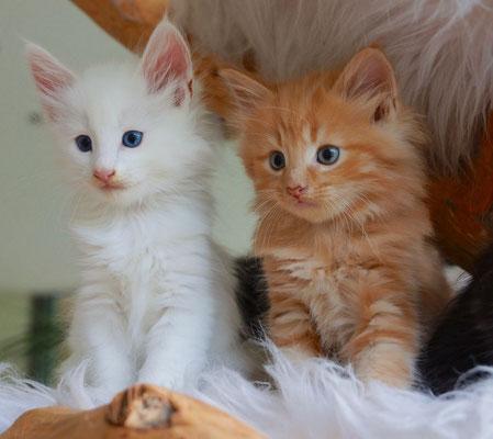 Enjo und Chili, 6,5 Wochen alt