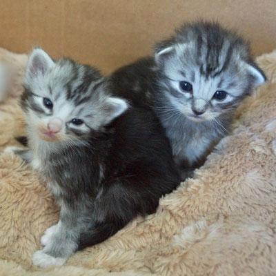 verschlafene Moira und Gizmo, 2.5 Wochen alt