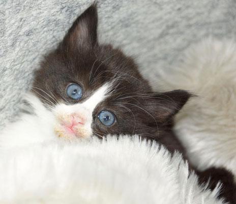 Der Schalk in den Augen