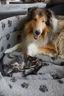 gemütlich bei Djaro im Bett