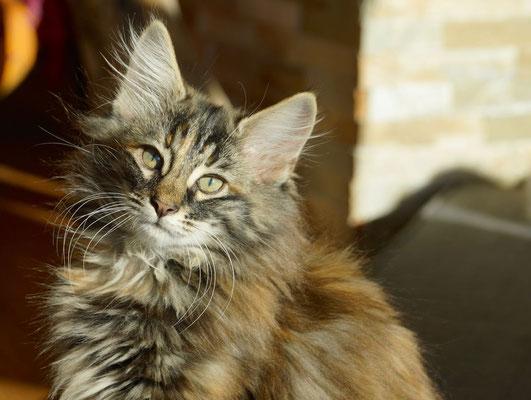 12 Wochen alt - wunderschöne Madame!