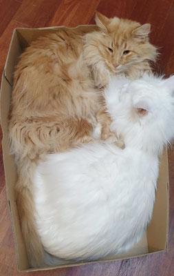 keine Kiste zu klein, um zusammen zu kuscheln... Dezember 20
