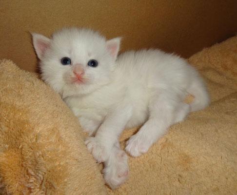 Cillas unglaublicher Charme :-), drei Wochen alt